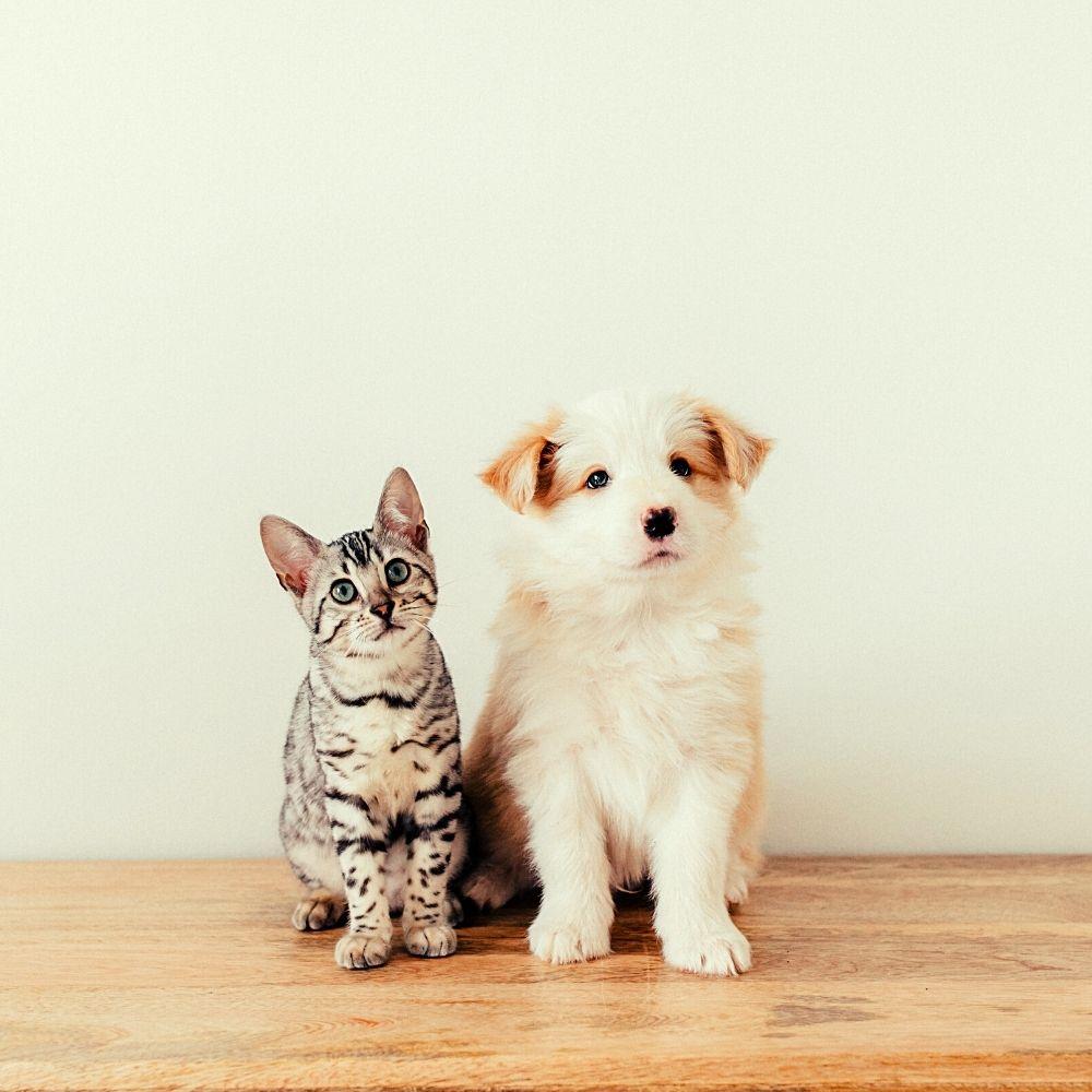 darmflora gesundheit probiotikum präbiotikum hund katze darm