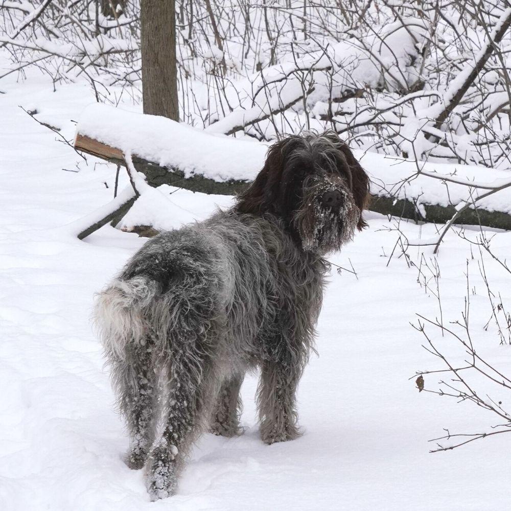 hund schnee streusalz