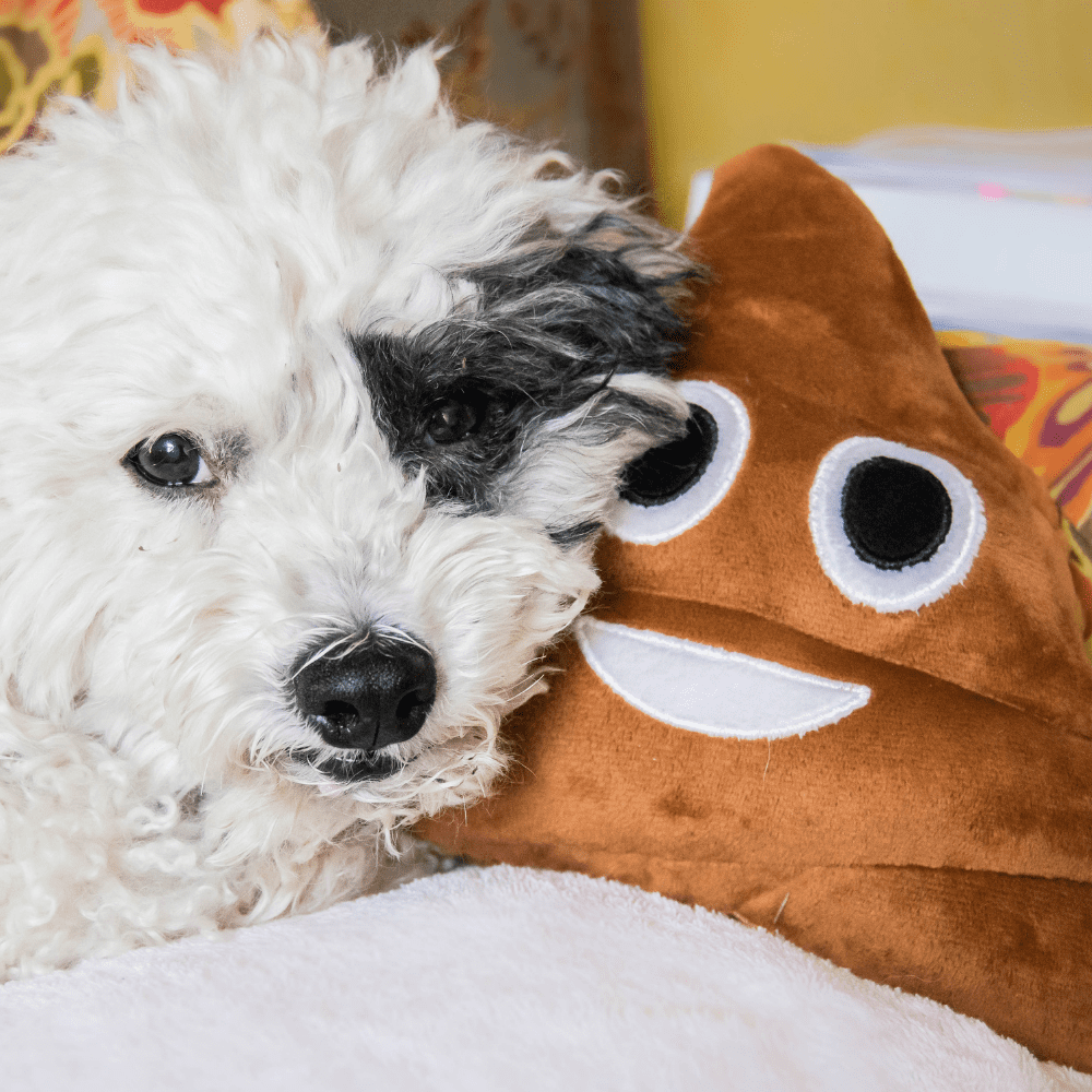 Hund Kot Verdauung